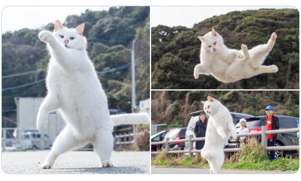 「のら猫拳」ここを通りたければ、我を倒してからだ!!