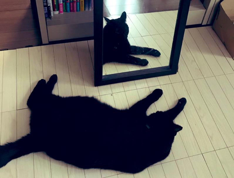 ホラーな猫写真
