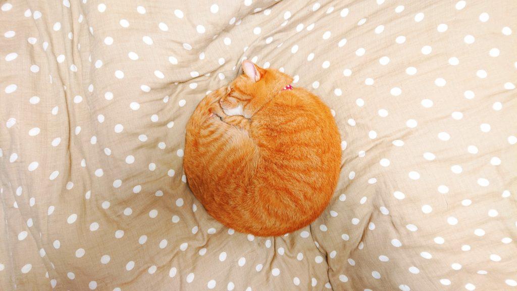 中秋の名月と一緒に、中秋の名猫をご覧下さい