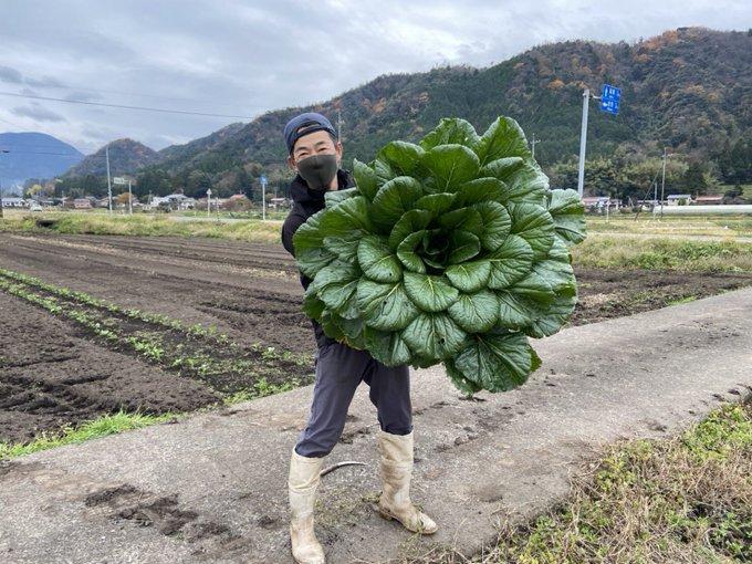 今シーズン最大の小松菜、捕獲