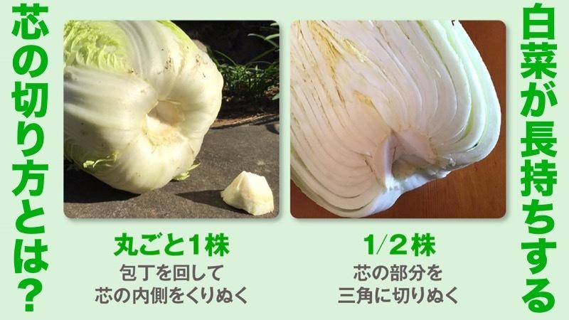 カットされた白菜を購入したときは、内側から使っていくと良い