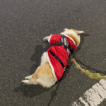 本日のサンタ活動終了のお知らせ!!