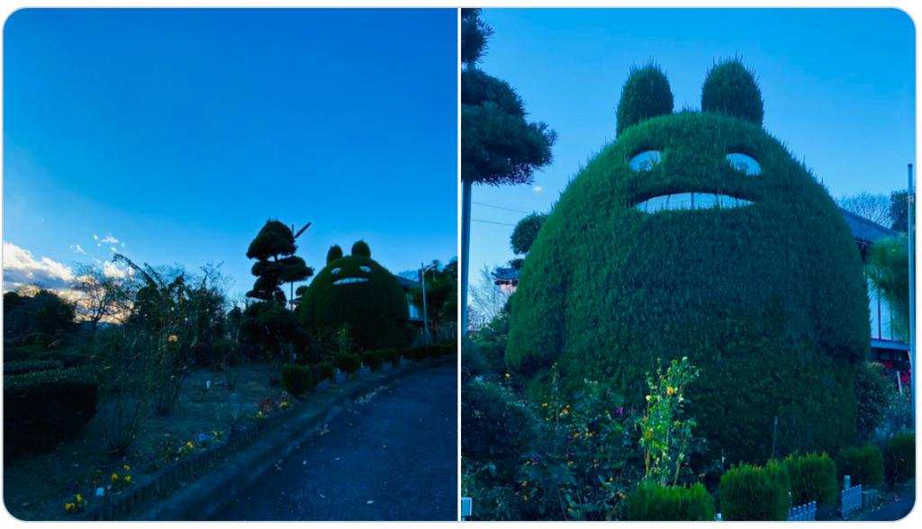 植木屋さんが綺麗に刈ってくれた庭のトトロ