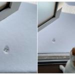 積もった雪の上を歩いてみようと思ったけど諦めた猫