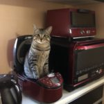 キョトン顔で炊飯器からひょっこり生えてる猫