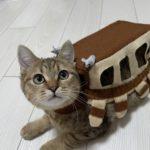 やっぱりこの猫バス君めちゃくちゃ可愛い