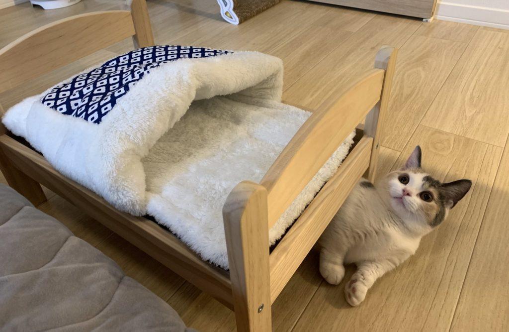 猫用ベッドの下に潜り込むニャンコ