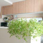 緑のあるキッチンはいいですね