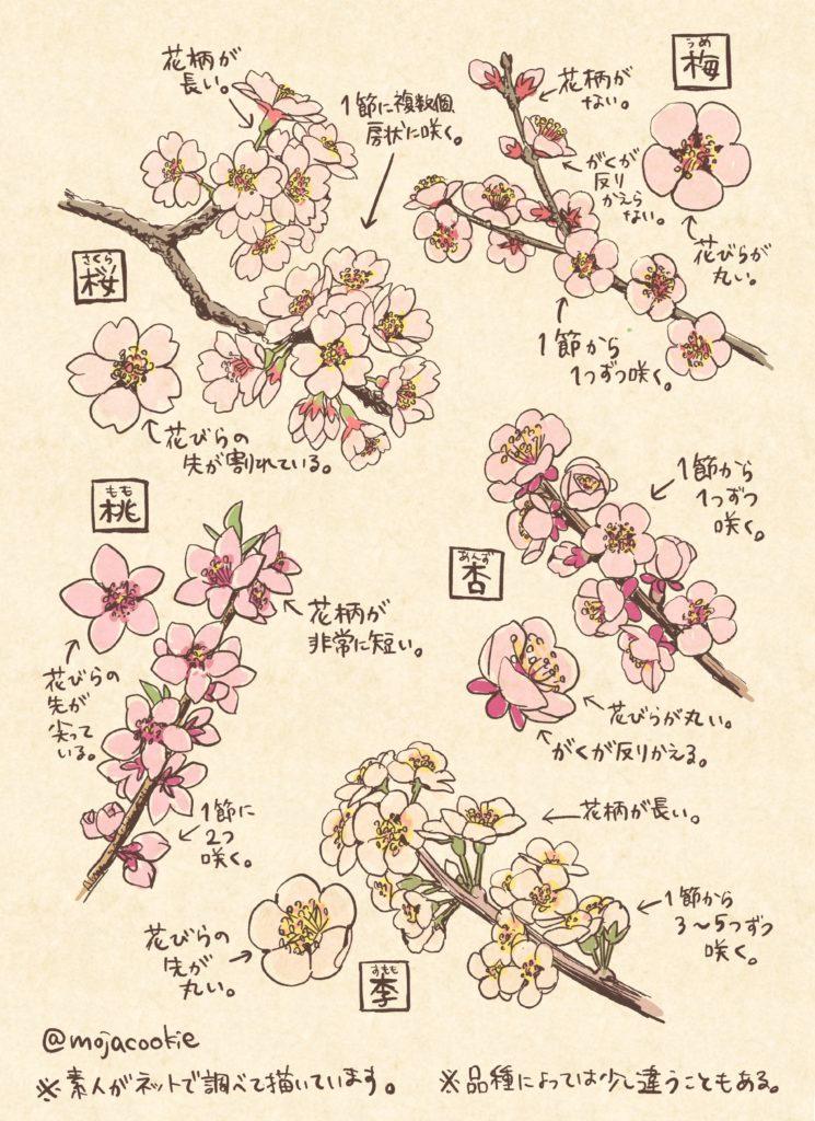 桜・梅・桃・杏・李の 見分け&描き分けメモ