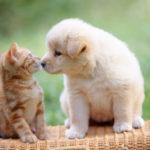 犬や猫のおしっこが出ていない時は絶対に様子を見ないで下さい。