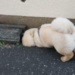 ブラジルの犬聞こえますかー?
